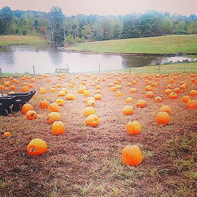 pumpkin-slider4